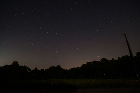 Night sky with lightening bugs and stars and trees.