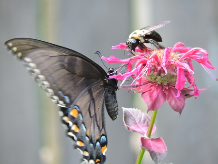 The bee and butterfly.