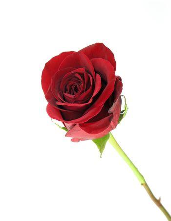 白で隔離された単一の鮮やかな赤いバラ