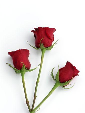白で分離された 3 つの鮮やかな赤いバラ 写真素材