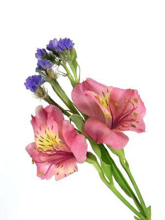 Alstromerium and status floral arrangement over white