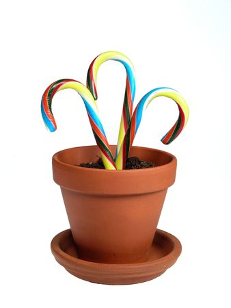 Rainbow colored candy canes in clay pot over white photo