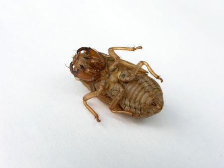 Ugly beetle like dead bug detailed closeup Banco de Imagens