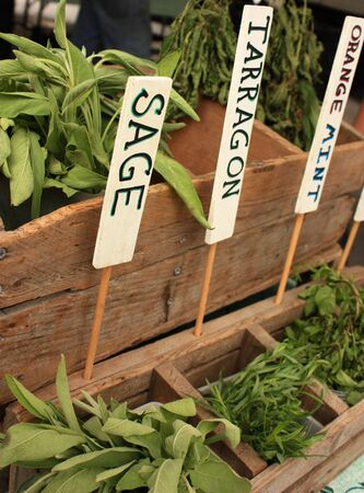 Fresh Herb On Farmers Market Фото со стока - 5213855
