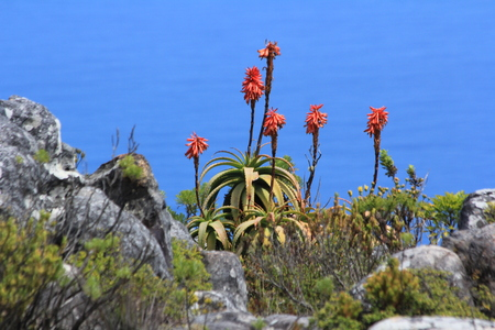 Biodiversity on Table Mountain South Africa Cape Town