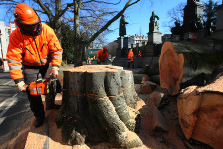 felling: Workers cutting tree