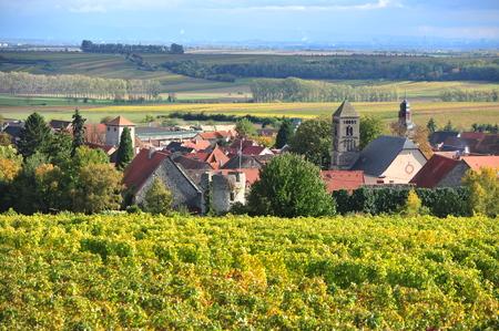 winegrowing: Town of Dittelsheim in Rhineland-Palatinate near Mainz Stock Photo