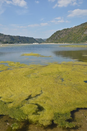 scourge: Bacharach, Germany - August 22, 2015: Algae plague in river rhine during heavy drought in summertime because of global warming Stock Photo