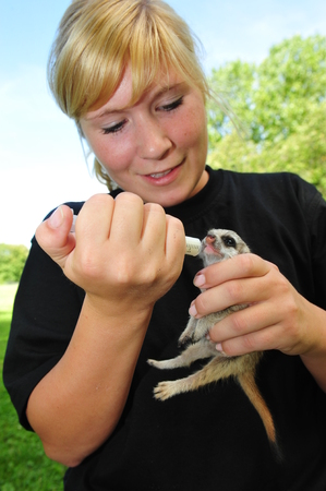 jule: Worms, Germany - Jule 21, 2009 - Female animale keeper feeds meerkat with syringe which lost her mother Editorial