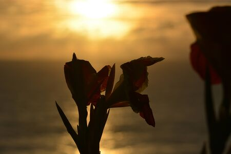 south india: Orchid flower during sunset in Goa, South India