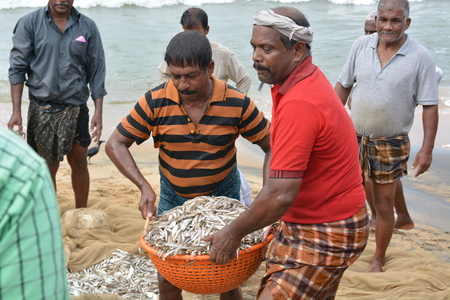 bargaining: Goa, India - November 5, 2015 - Fishermen catching fishes the traditional way  sharing the catch and bargaining