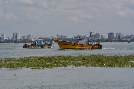 plague: Kochi, India - November 11, 2015 - Fisher boat in front of Kochi harbor in India with water lily plague in foreground