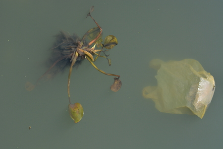 plague: Water lily plague in indian ocean Stock Photo
