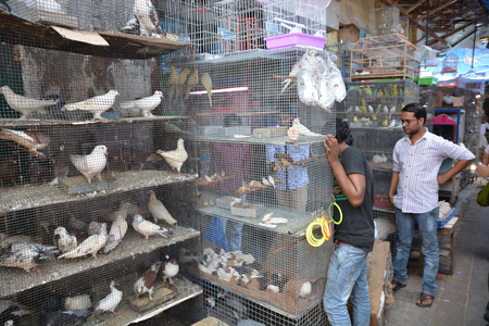 locked in: Mumbai, India - October 19, 2015 - Birds on indian market locked in cages is often seen as animal tortue by european standards