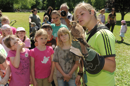 animal park: Worms, Germany - Jule 27, 2014 - Kids looking at a falcon in a animal park as part of a school project Editorial