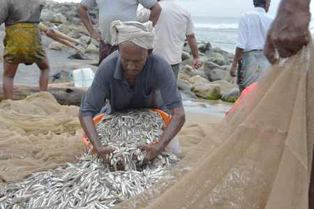 varkala: Goa, India - November 5, 2015 - Fishermen catching fishes the traditional way  sharing the catch and bargaining