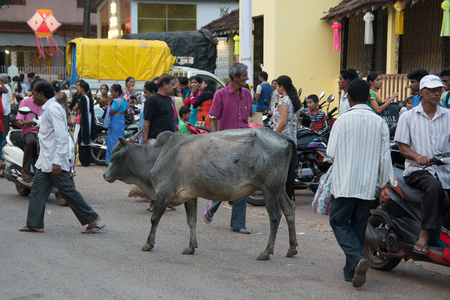 Goa, India - July 8, 2018 - Holy cow in typical traffic situation on indian street in Canacona - Goa