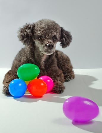 Dog with Easter eggs Imagens