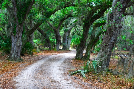 canopy: country road through oak forest Stock Photo