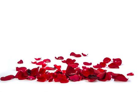 白い背景に、バラの花びらをランダム