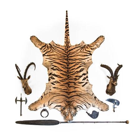 big game: Grande parete gioco trofeo con una tigre