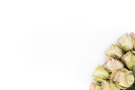 hint: Isolated yellow roses with hint of pink as background for wedding invitations cards, ads or promotional work.