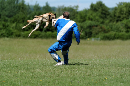 dog sport Standard-Bild