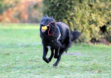 running groenendael photo