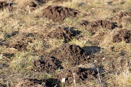 molehill: molehill Stock Photo