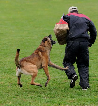 dog competition