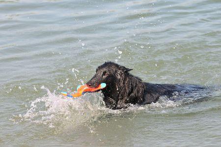 swimming groenendael photo