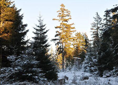 winter wonderland: Winter Wonderland