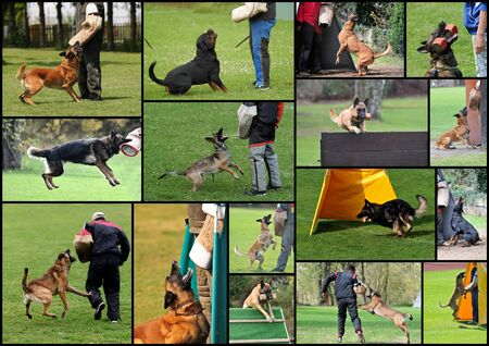 dogsport collage photo