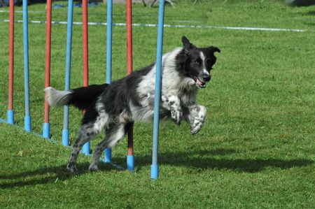 obstacle course: Agility Stock Photo
