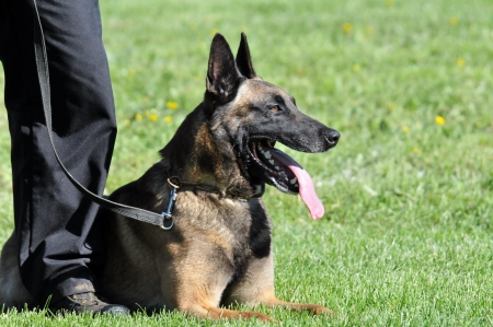 police dog photo