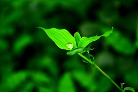 kropla deszczu: Raindrop złapany na liściu
