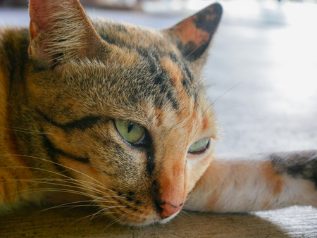close up: cats eyes close up Stock Photo