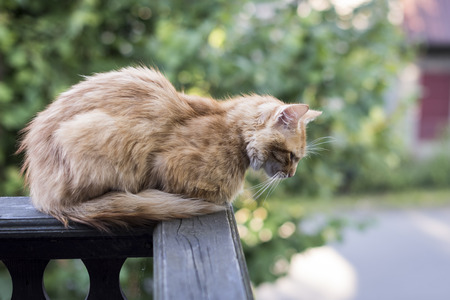 lazy cat sitting on the porch of a house