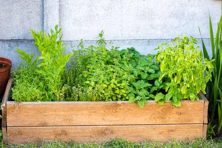 a box with herbs in the backyard garden Stok Fotoğraf