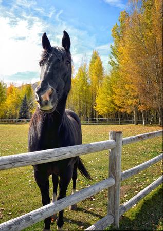 Fall Beauty on the Farm