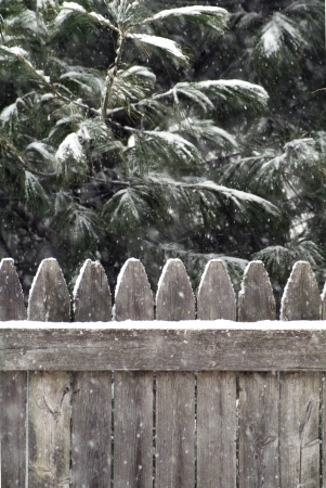 boughs: Snow accumulates on evergreen boughs and top of fence