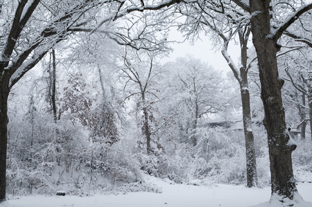Snow sticks to trees and rust leaves not yet fallen in beautiful winter scene  photo