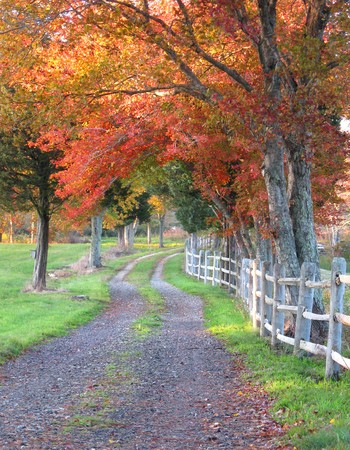 Flowery Lane in Autumn, Plymouth, MA photo