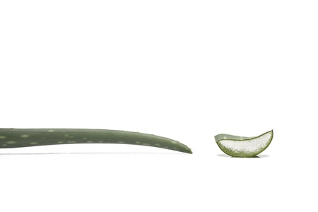 aloe vera plant Stock Photo - 17205010