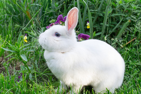 white rabbit sitting on the grass near flowers photo