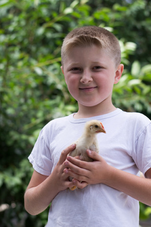 boy, with a little chicken in his hands photo