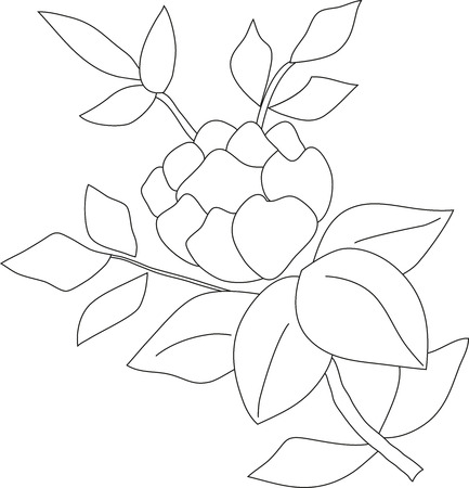 Rosas Lápiz Manuales Ilustración Arbusto De Tres Flores Y Hojas ...