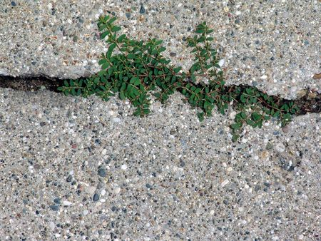 surface of concrete driveway with crack and weeds Stock Photo