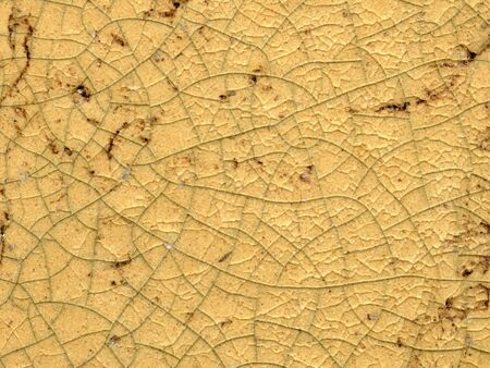scan of textured cracked tan surface of pottery