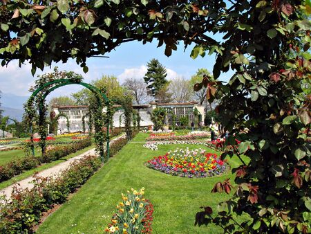 rose tree: tulips and other flowers in a garden near Lago Maggiore, Italy  Stock Photo